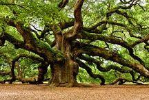 drzewa / Trees