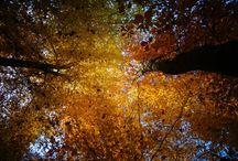 Natur / Flickralbum