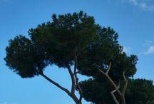 me & Roma & maritime pines / Foto di Roma