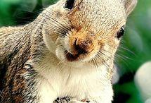 Squirrel! / by Ami Ostman