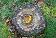 Paddenstoelen / Waar het zoeken van paddenstoelen niet allemaal toe leidt! Kijkt zelf maar.