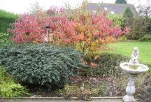 Our peaceful garden / Al de mooie en grappige dingen des levens...