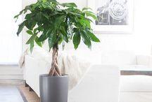 schöne Pflanzen für Zuhause