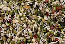 soaking, sprouting and fermenting / by Nikki Cooper