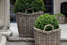 boxwood planters