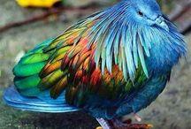 Birds / Other Birds
