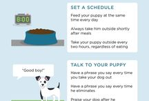 Fur Baby tips