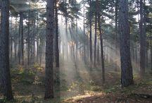 Woods - Erdők / Inspirational pictures showing woods - Inspiráló képek erdőkről