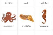 Ζώα θαλασσας