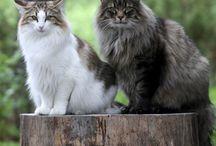 deko zvířata-kočky