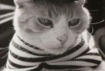 Cats-  I Like