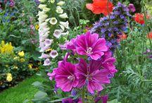 Bloemen, planten, tuin e.d