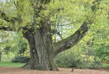 Self-Guided Tours - Native Trees