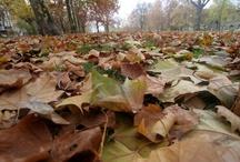 Autumn - Herbst