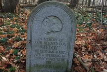 Abandoned Pet Cemetery / This pet cemetery began around 1933. Cats, dogs, a soldier's horse and birds were some of the animals buried here. The last burial was sometime in the 1970's. This cemetery has been lost to time.