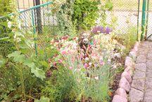 W ogrodzie (in the garden)