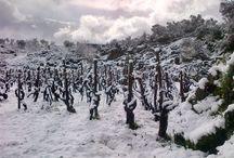 A snowing day at Feudo di Mezzo #Winery / #Snow #Etna #neve #Sicilia #Sicily