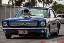 "Mustangs ""BLOWN PONIES"" / picture from www.ozwild.com"