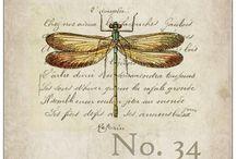 Dragonflies gr