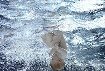 Ocean&Underwater / by Natasha Moore