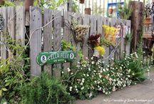 wisteria ideas