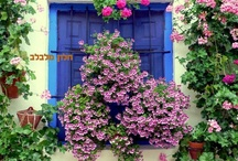 there's a flower on my window! / In my opinion, flowers reflects how happy you are in life. Flowers show happiness.
