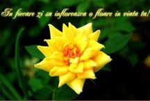 Florile şi viaţa