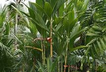 Gardening - to plant - Tropical