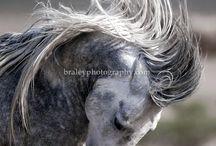 Horse...horses..
