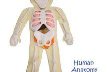 lidské tělo quietbook
