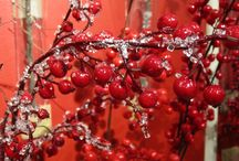 Christmas - Berries / Christmas
