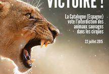 Droits des animaux / Lois et victoires pour nos amis les bêtes