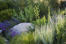 Perennials gardens