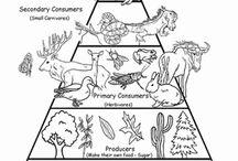 Science: Animals