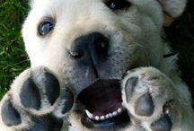 Koirat ovat söpöjä