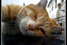 Paphotografy 6 - CatShow / Cat Show and Cat Love