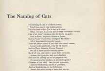 Kitty cats ......