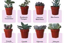 Fairygarden plants