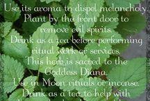 Herbalism: magickal side of herbs