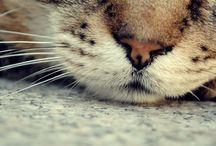 katten en poesen