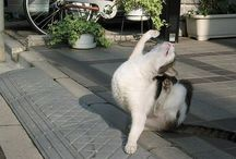 Dramatic Cats / Cats can be so dramatic sometimes! / by Pets Insure Together