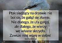Bird's quote
