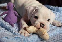 """Masha""""s dogs / О прикольных, милых, и смешных собаках."""