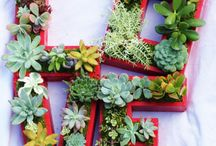 Planten decoratie