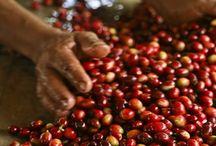 Cafés de orígenes puros / Cada saco de café,  cada grano, contiene la esencia viva de la región donde se ha cultivado. Los distintos orígenes de cafés que los hace únicos.