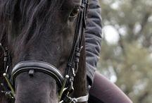 Horses /\/\/