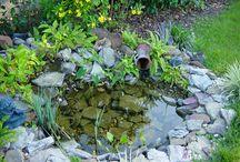 bog pond