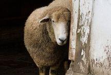 amie mouton