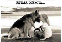 imagen perros