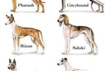 Origin of the Dogs / dogs, ancient dogs, ancient breeds,